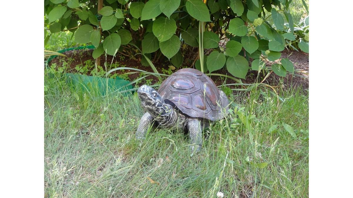Podiņš bruņurupucis