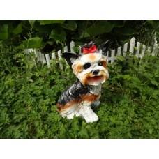 Suns - jorkšīras terjers