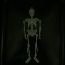 Skelets